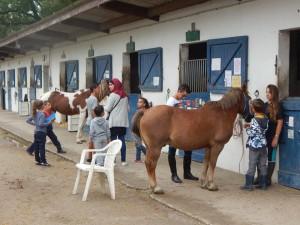 Atelier soins aux chevaux